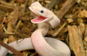 Happy-Snake-wiki.png